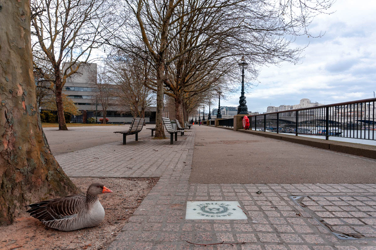 The local wildlife seems to be enjoying the lack of people on the South Bank